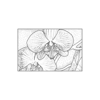 BUTTERFLY ORCHID (1) CLING MOUNTED RUBBER STAMP